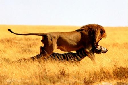 Постер (плакат) Лев
