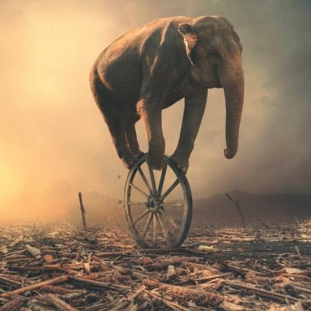 Постер на подрамнике Слон на колесе