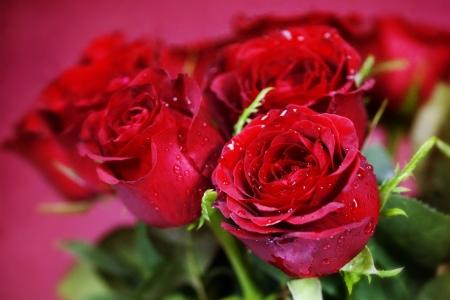 Плакат Красные розы