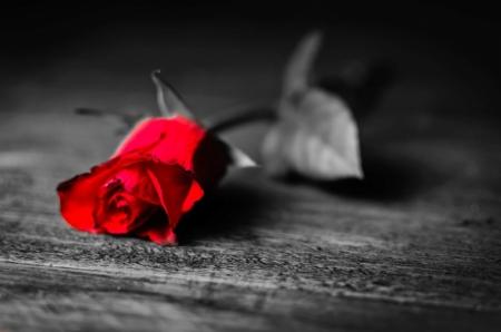 Постер на подрамнике Роза на столе