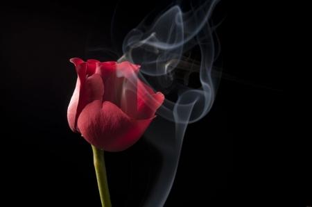 Постер на подрамнике Красная роза