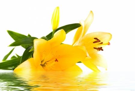 Постер на подрамнике Желтая лилия на воде