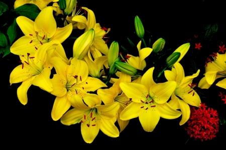 Постер на подрамнике Желтые лилии