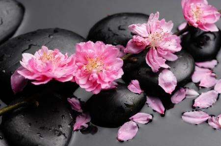 Плакат Цветы сакуры на камнях
