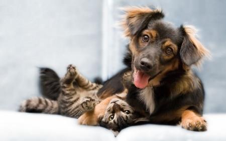 Постер на подрамнике Собака и котик