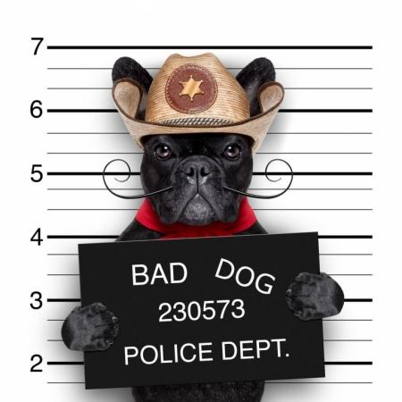 Постер на подрамнике Собака в полицейском участке