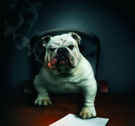 Постер (плакат) Собака босс в кабинете