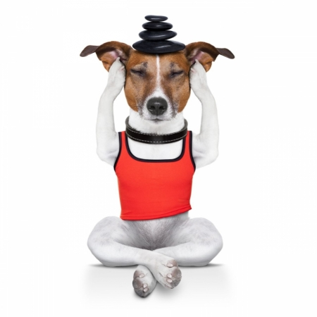 Постер (плакат) Собака занимается йогой. Релакс