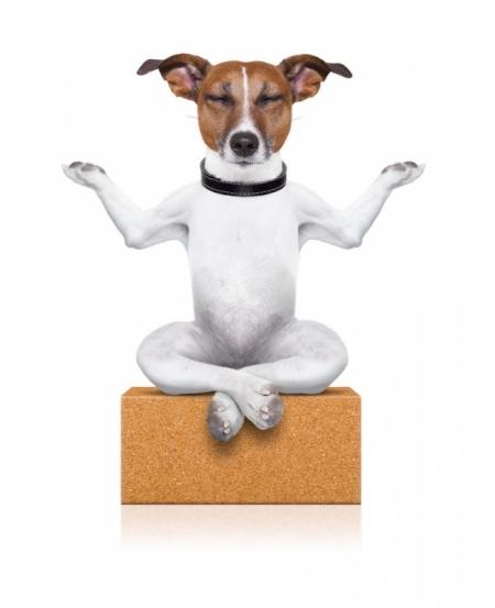 Постер на подрамнике Собака медитирует