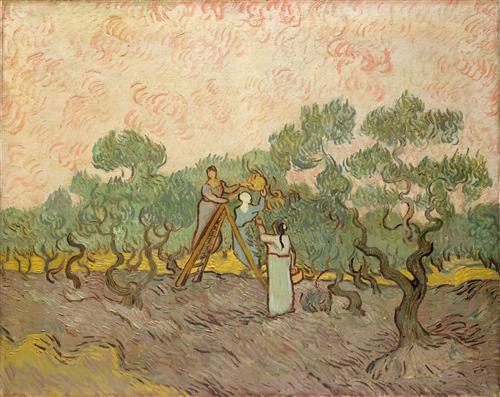 Постер на подрамнике Женщины собирают маслины