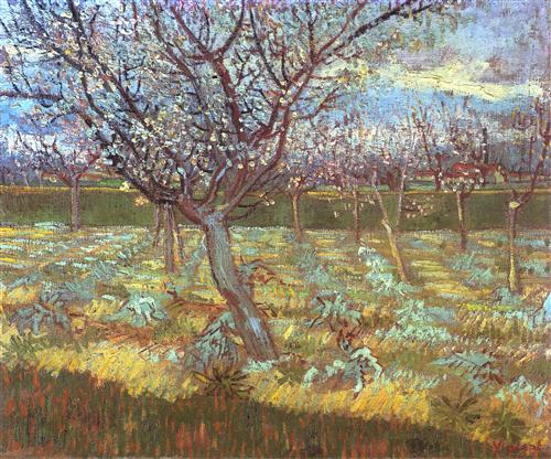 Постер на подрамнике Apricot Tree in Bloom