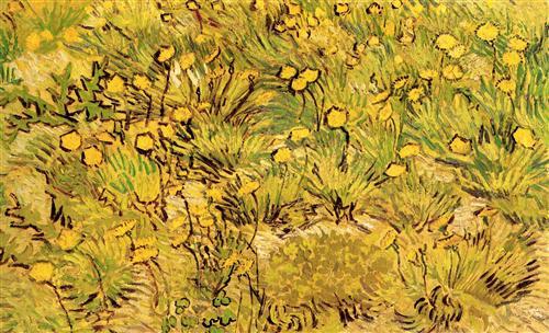 Постер на подрамнике Champ de fleurs jaunes