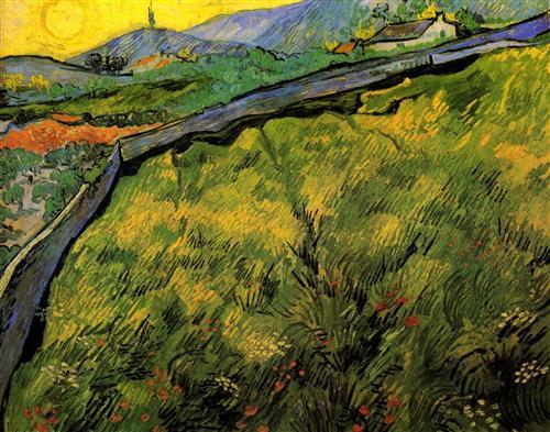 Постер на подрамнике Field of Spring Wheat at Sunrise