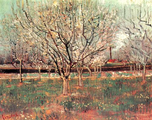 Постер на подрамнике Orchard in Blossom Plum Trees