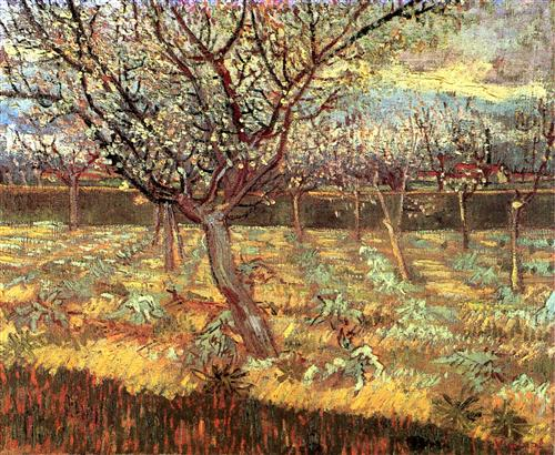 Плакат Apricot Trees in Blossom 2