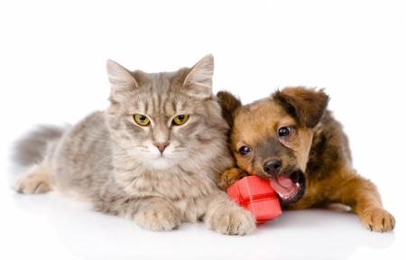 Постер на подрамнике Котенок и щенок