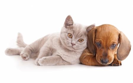 Постер на подрамнике Кошка и собака