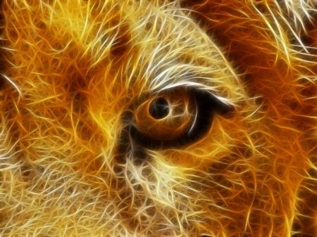 Лайтбокс Взгляд льва