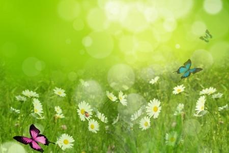 Постер на подрамнике Бабочки на лугу