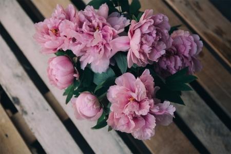 Постер на подрамнике Розовые пионы